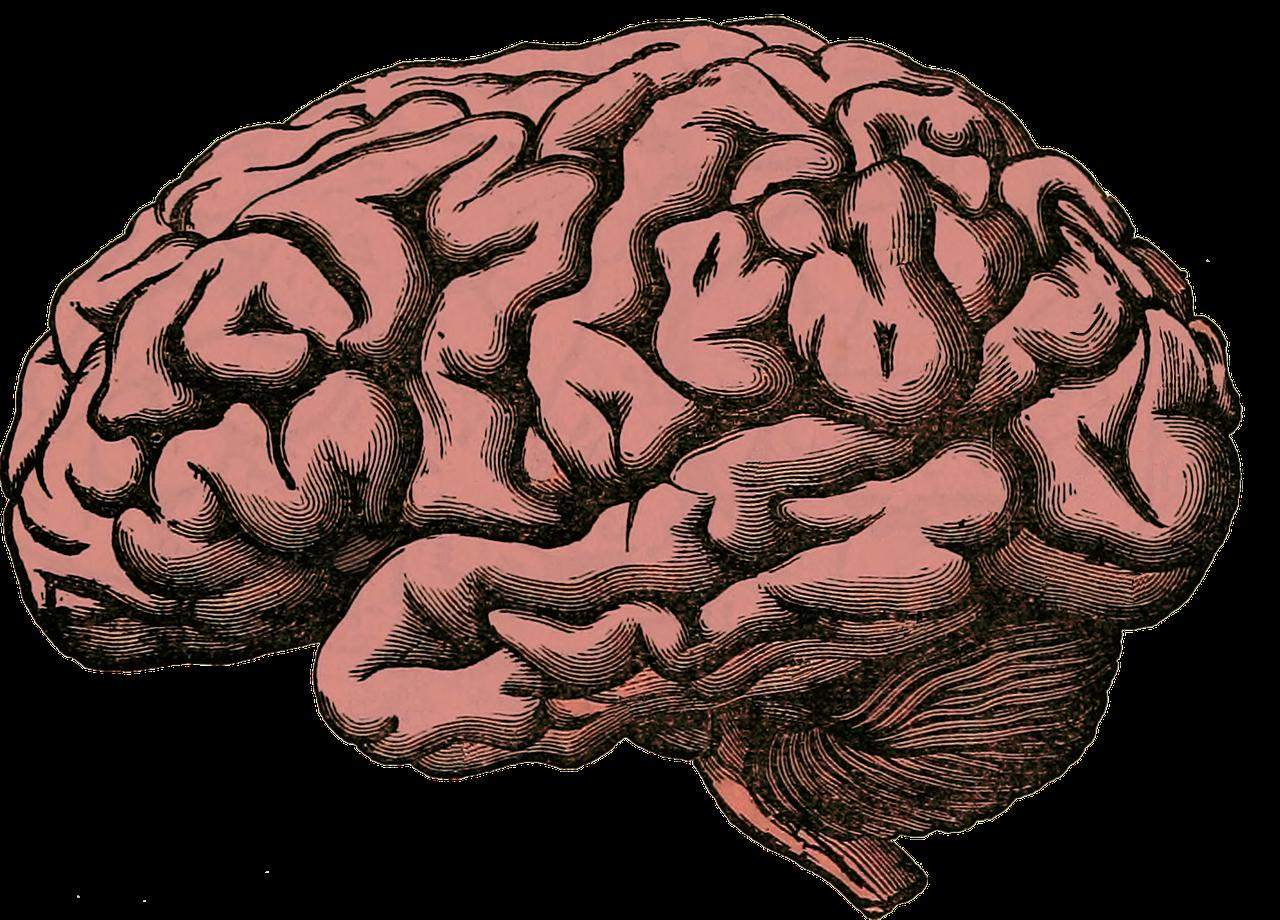 Cerebro CBD