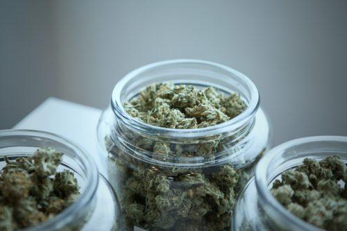 Marihuana Fresca