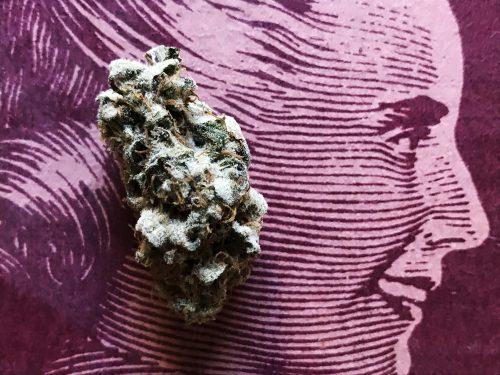 Mujeres y Cannabis - Javier Hasse