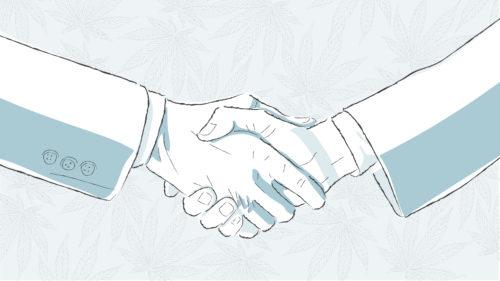 Cannabis Negocios