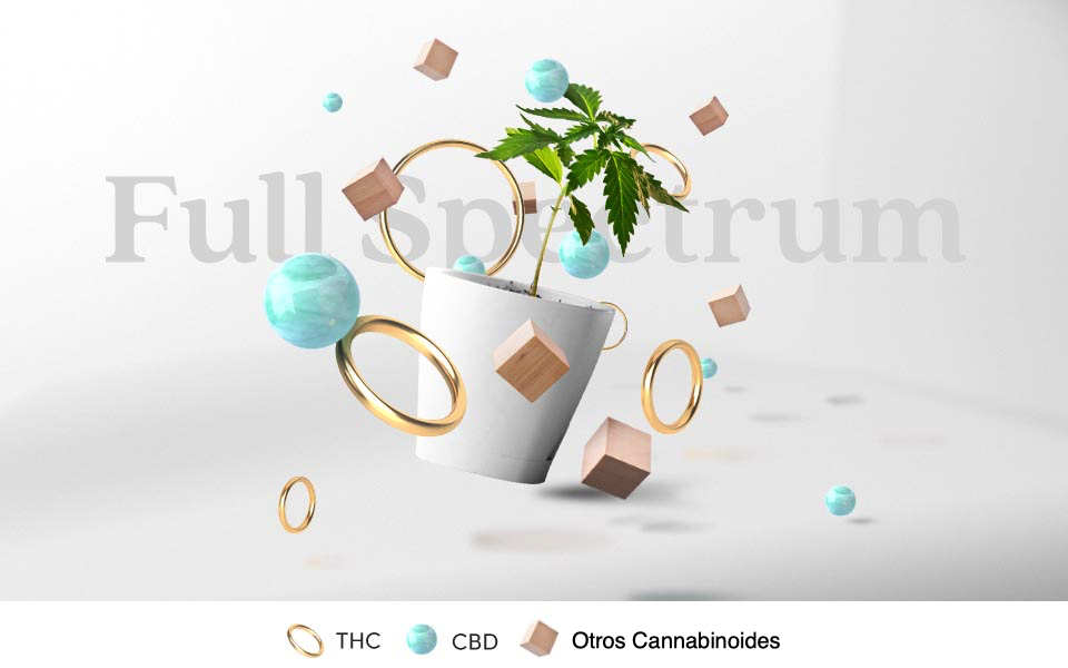 Concentrados Cannabis 2