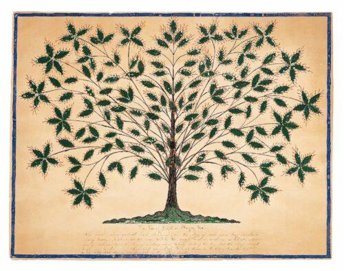 Árbol de la vida cannabis marihuana