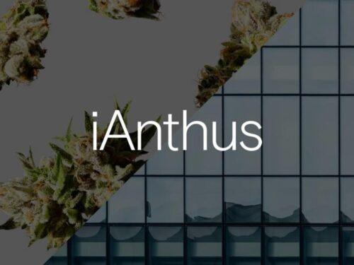 ianthus