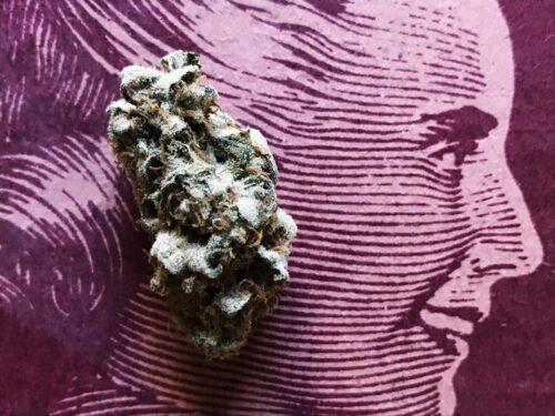 mujeres cannabis