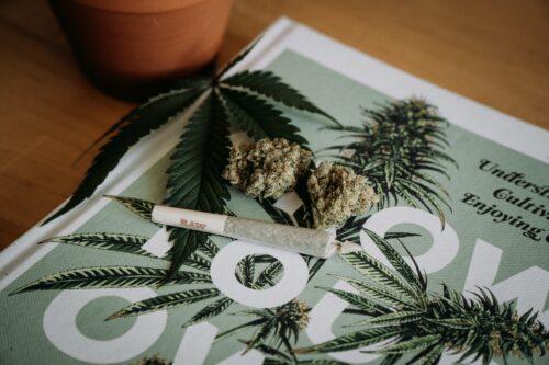 datos marihuana