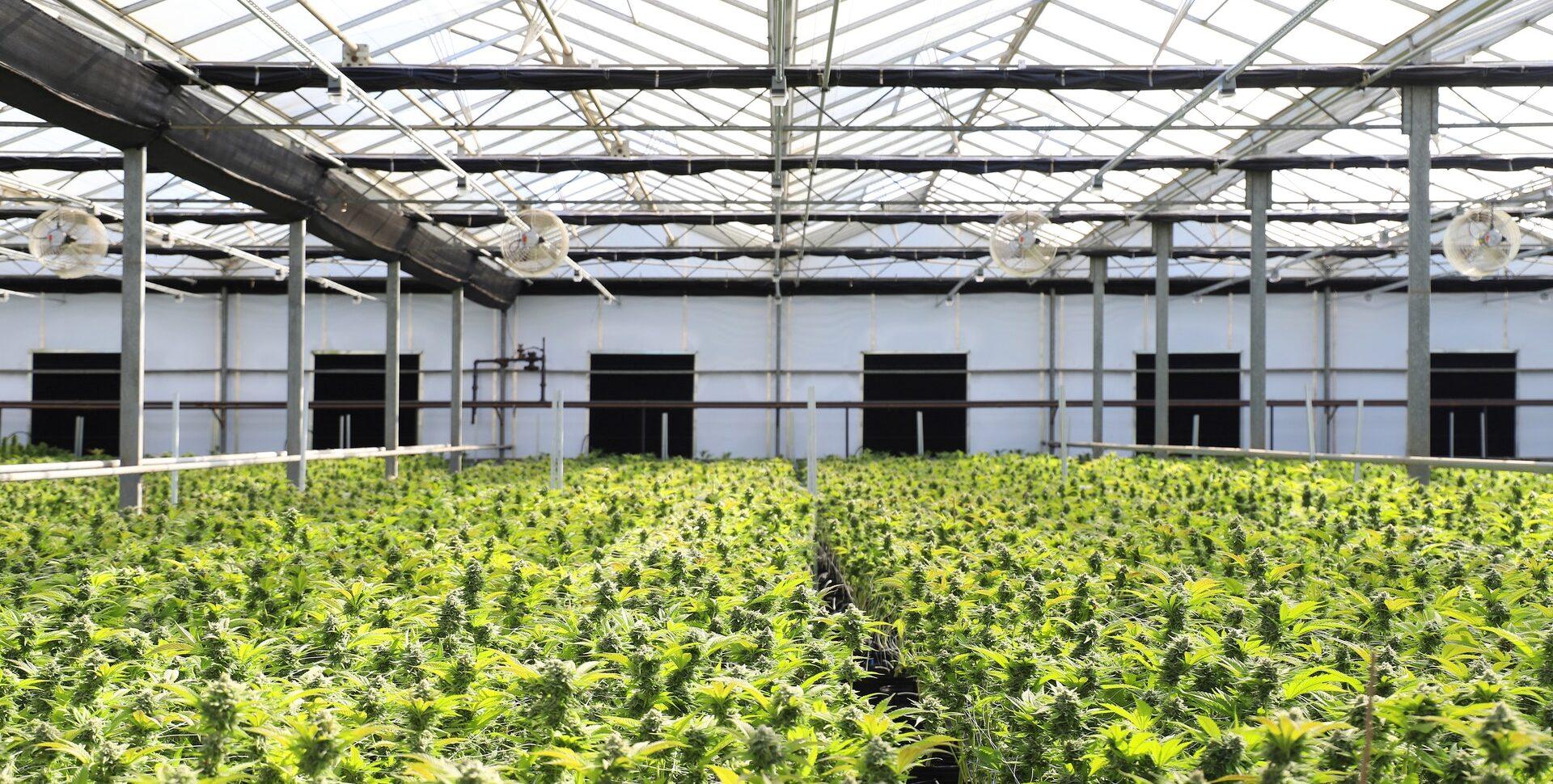 industriacannabis.com.ar