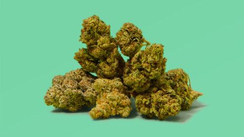 cepas marihuana